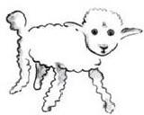 mouton-1