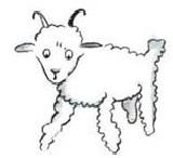 mouton-2