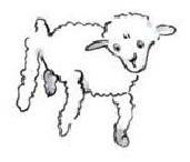mouton-3
